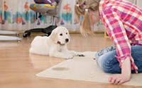 Carpet Cleaning Services Weston